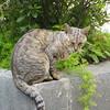 Taromina: cat in Villa Communale