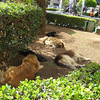 Monreale dog days
