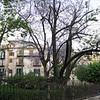 Kalsa Quarter: a tree bursting with purple flowers