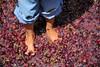 Grapestomp, kids feet