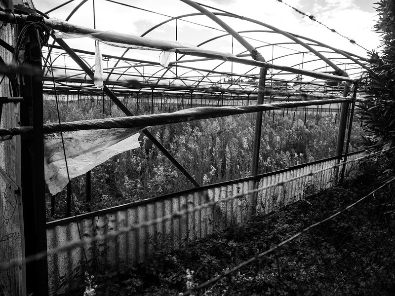 Codavolpe Farm