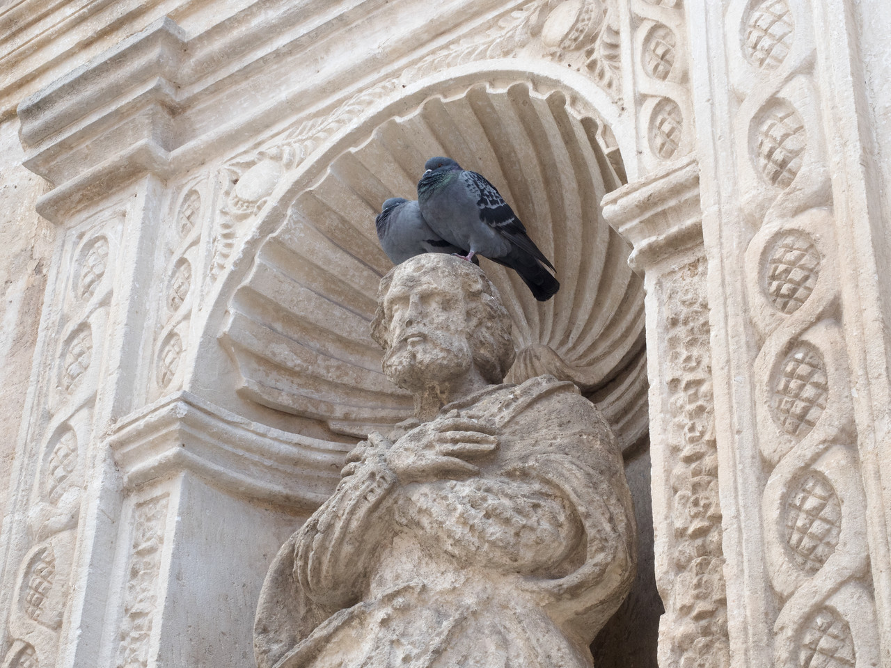 Rock Doves (Pigeons) are everywhere