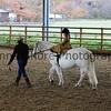 Xmas Side Saddle Show 020