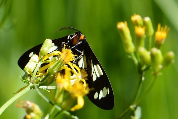 Agnew Meadows Wildflower Walk - July 6, 2015