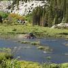 Zoomer on beaver hut