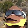Monkey shades