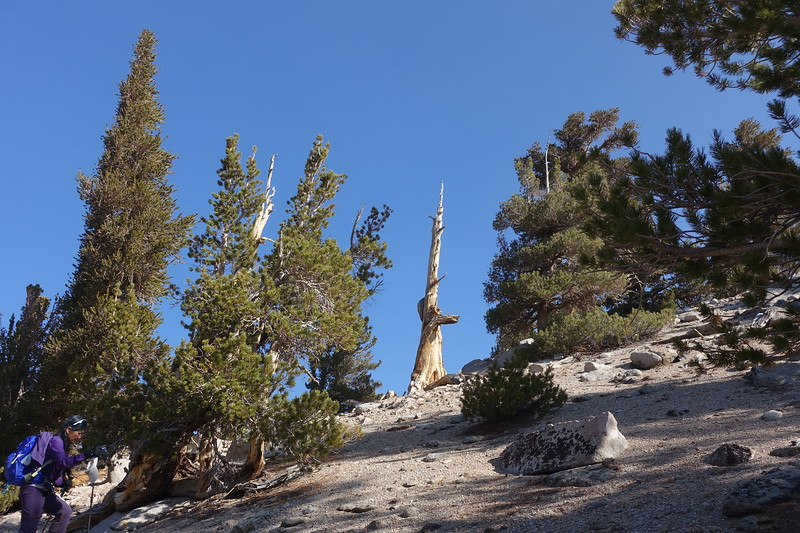 We ended up going high starting at the two posts near Golden Trout Camp.  We side-hilled the slope to the camp's east which wasn't too bad, ending up almost at the welcoming posts up in the meadow.  I actually preferred this up route vs staying low and connecting to the use trail near the camp.