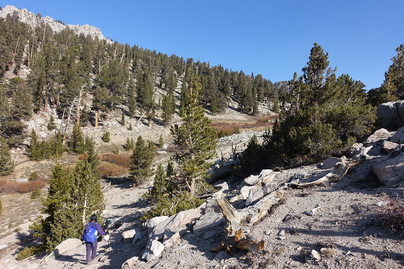 Here's where we joined the use trail (seen below).  The meadow welcoming posts are faintly visible far right.