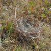 Sooz found this nest