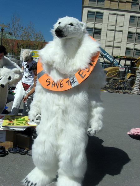 Polar bear statement at SF hearing on offshore drilling