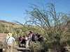 With giant ocotillos