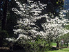 Profusion of blossoms in the sun