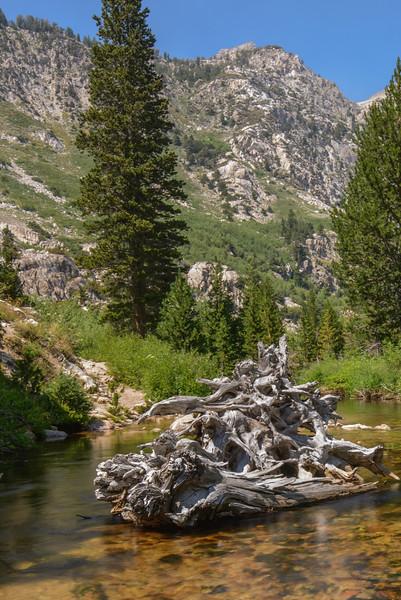 Robinson Creek Deadwood
