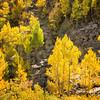 Sierra Colors