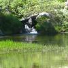 inlet of Emerald Lake