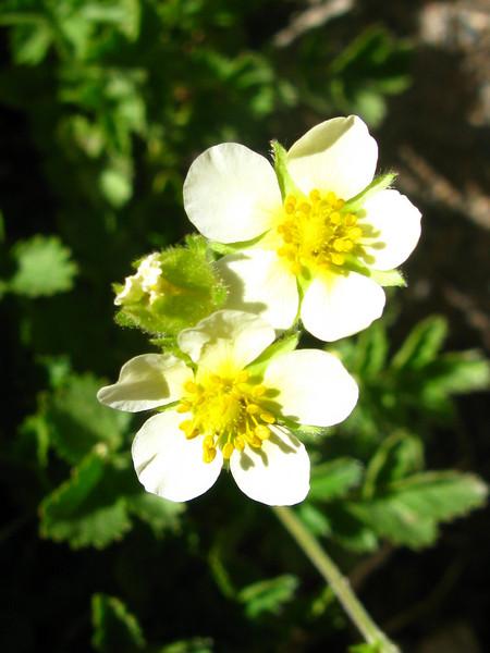flower - need id