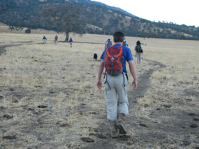 hike starts out across a cow field