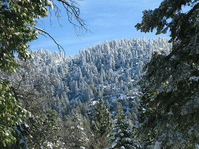 ice in the trees