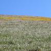 still some flowers on the hillside