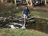 Tomcat on a log crossing