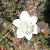 flower - need ID.