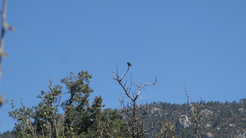 bird on perch of tree
