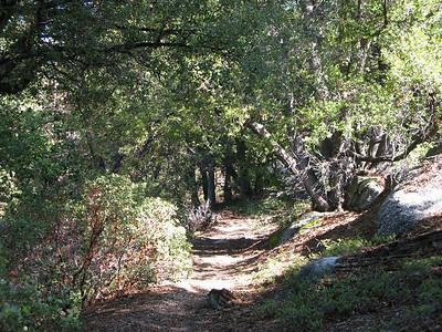 trail to Jerkey