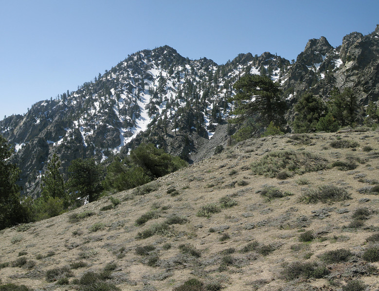Spanish Needle from the saddle