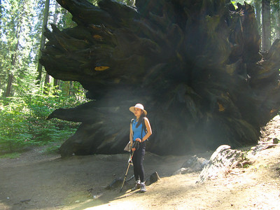 Sunmi beside a giant tree root. I wonder what noise this tree made as it fell over?