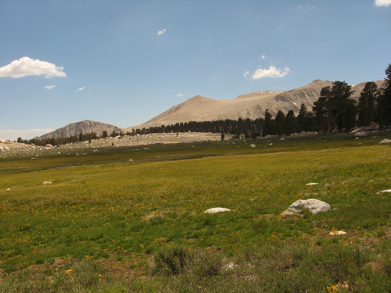 meadow with Cirque Peak in background