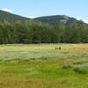 Horse Meadow