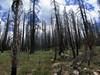 blackened trees