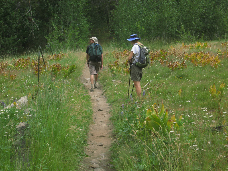 just west of the corral - crossing another meadow