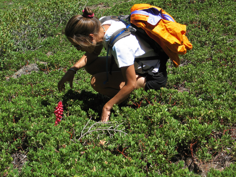 Holly wanders off trail to inspect closer