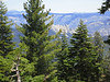 from the summit - we can see the Needle through the trees(the rocks - not the pine needles)