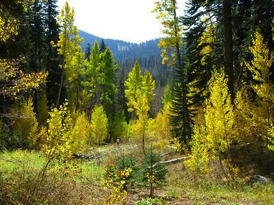 Trout Creek Aspens 10-16-10