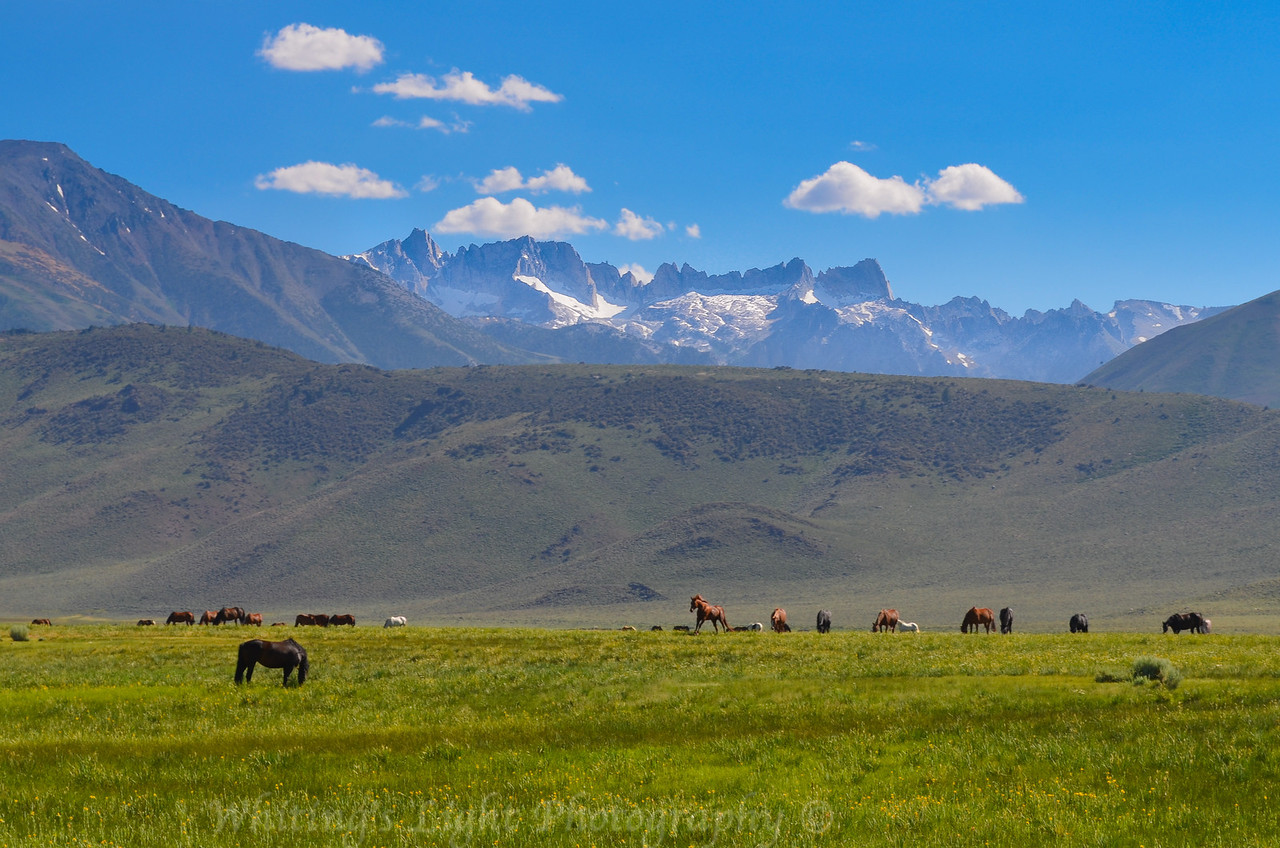Sierra Stallions and the Sawtooth Range