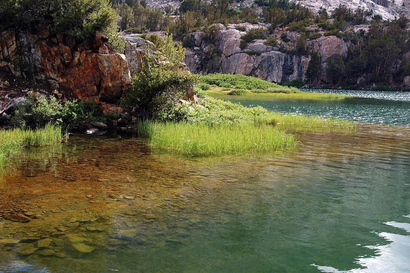 Grass at Long Lake.