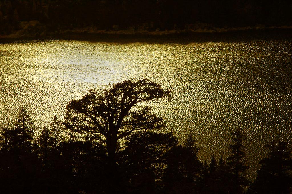 Trees at the lake's edge.