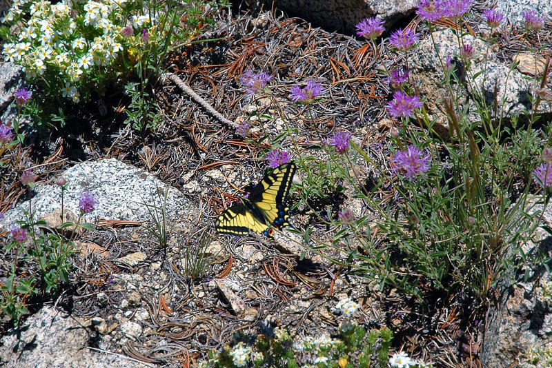 Found this butterfly feeding on fowers. Watched it for awhile before heading down to the trail to finish the loop back to Long Lake.