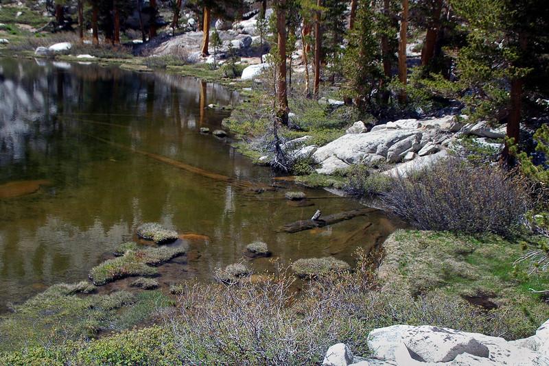 Grass Lake's shore line.