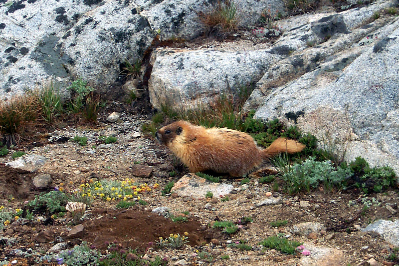 The first marmot I saw was just past Lower Desolation Lake. We saw a lot of them on this trip.