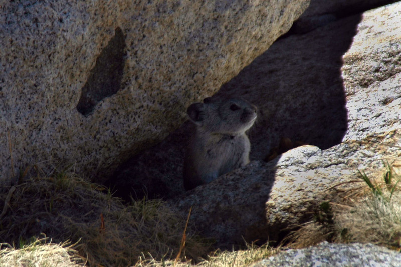 Another view of the Pika.