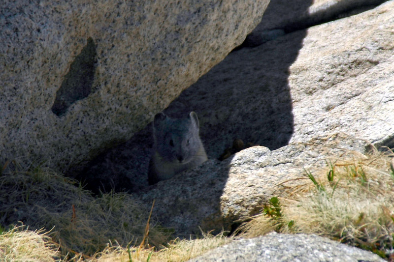 This pika was in the rocks at our break spot.