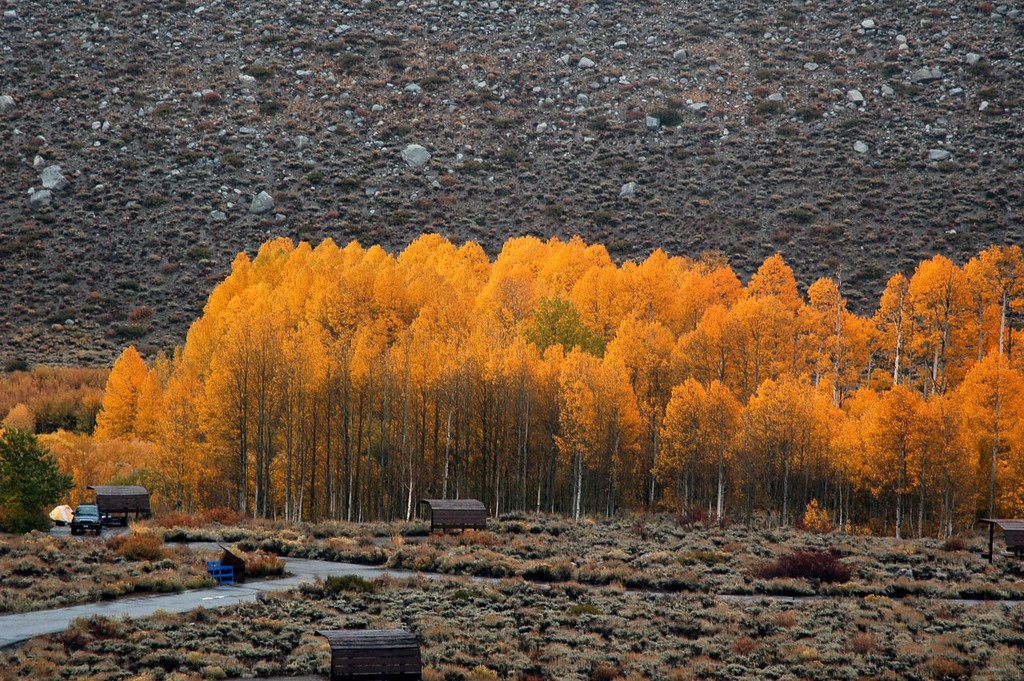 Group of colorful trees at the McGee Creek campground.