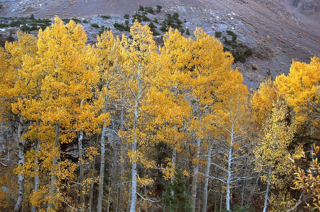 Colorful trees near the trailhead.