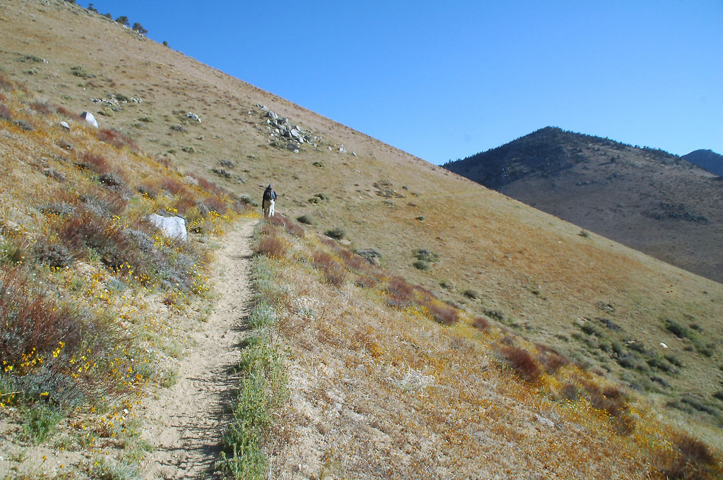 It's been a long time since I did a hike on a trail, most of the hikes we been doing have been XC.