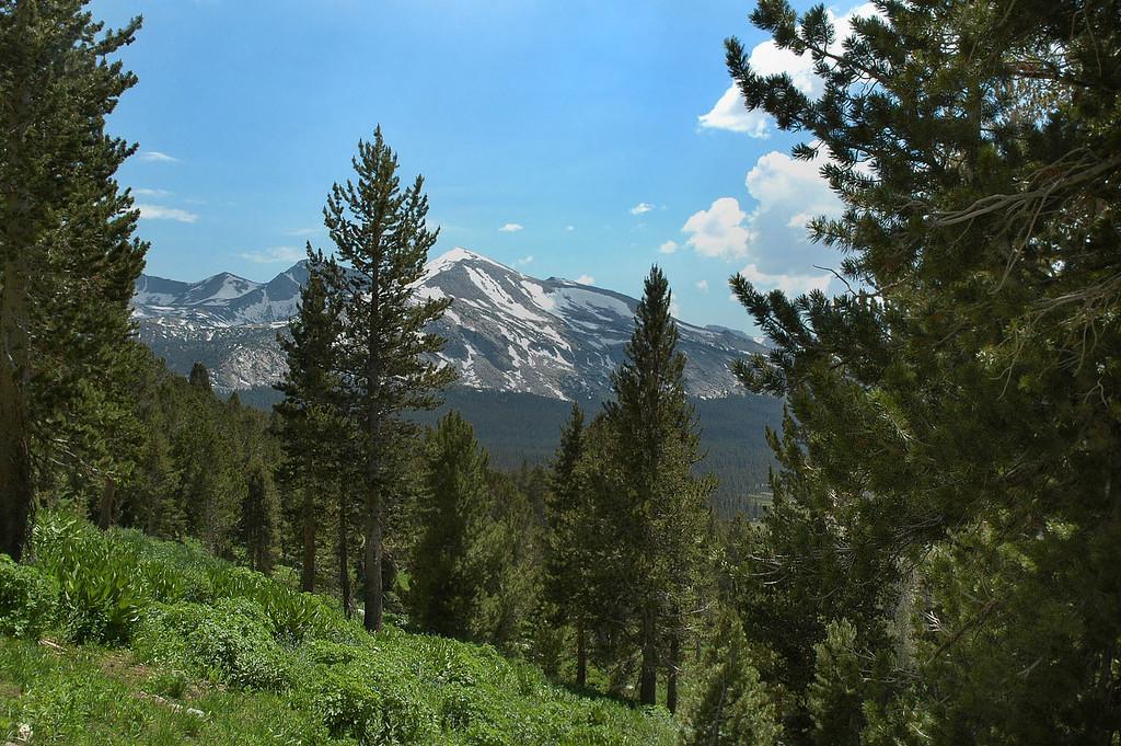 Mammoth Peak (not Mammoth Mountain) through the trees