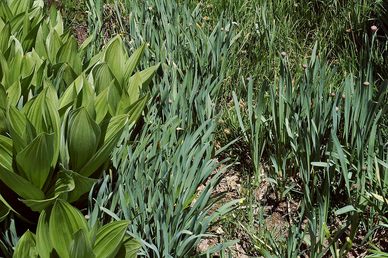 Took a different route down and hiked through an area filled with wild onions, smelled good.
