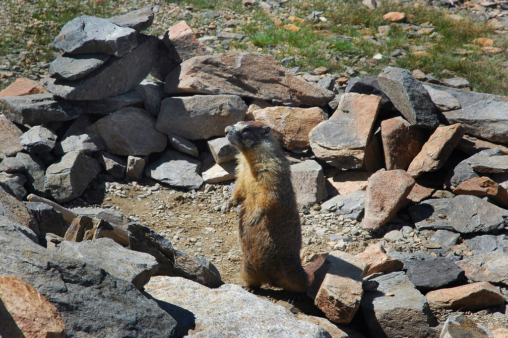 After I got a few photos he started doing the marmot dance, then ran away at full speed.